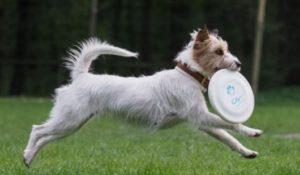 Betty_Hundeschule